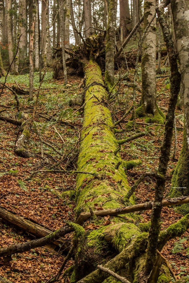 Strogi prirodni rezervat Prašuma Janj